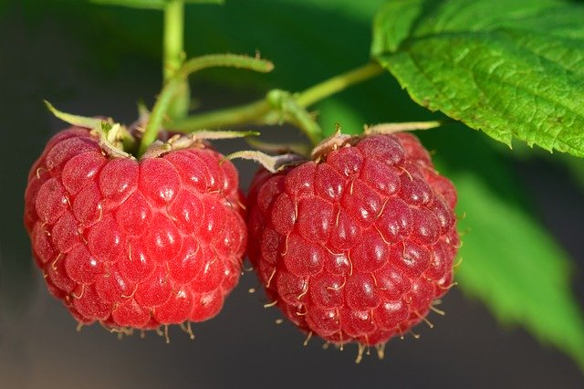 Himbeere - Frucht des Sommers